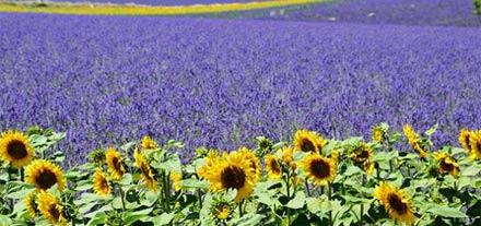 Drôme Provençale Umgebung Provence-Campingplatz